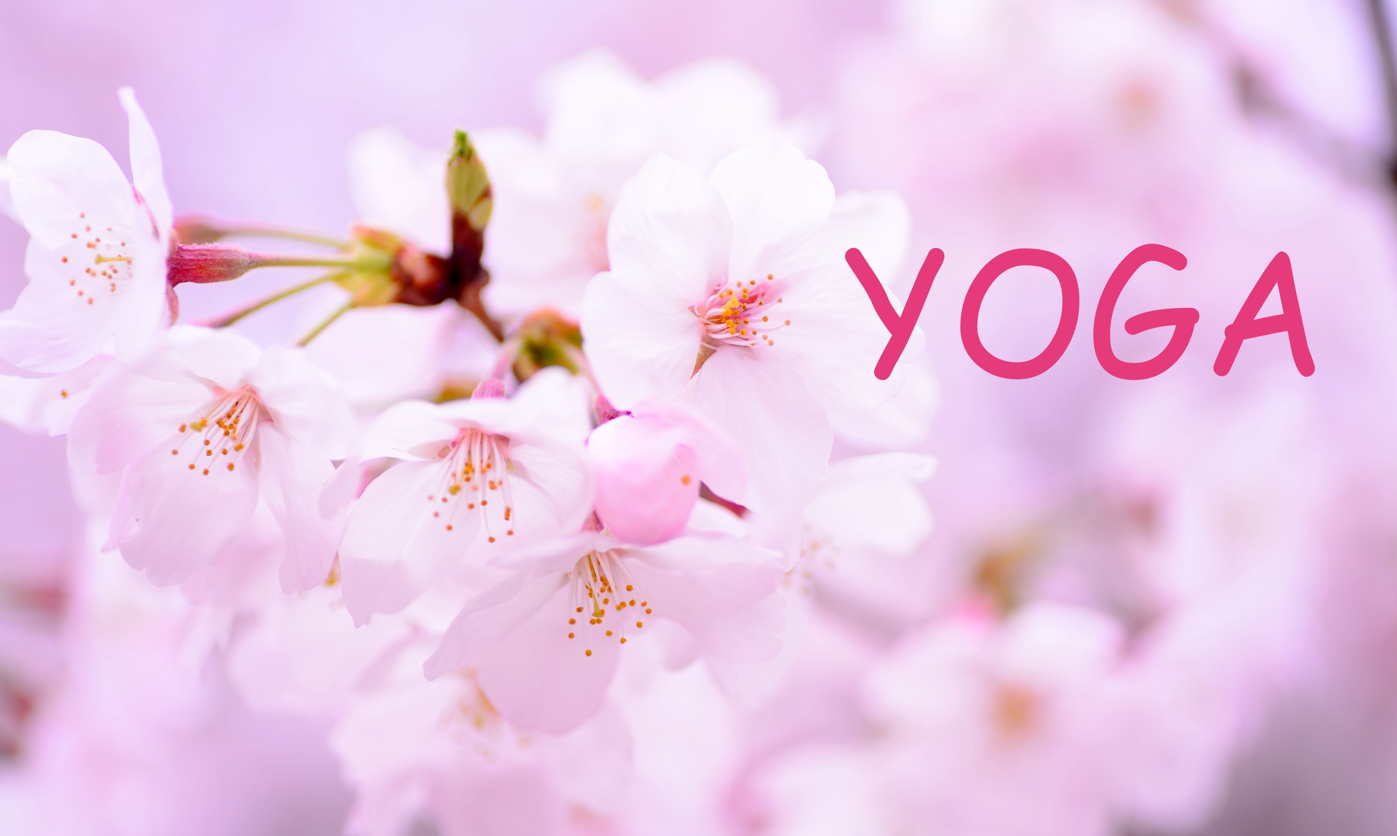 Cours de Yoga du lundi au jeudi sur Bordeaux Chartrons